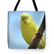 Cute Little Yellow Budgie Bird In Nature Tote Bag