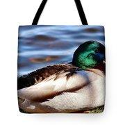 Cute Male Mallard Duck Tote Bag