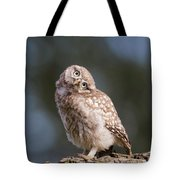 Cute, Moi? - Baby Little Owl Tote Bag