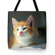 Cute Orange Kitten With Large Paws In Sunny Day Tote Bag