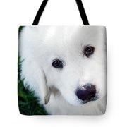 Cute White Puppy Dog Portrait. Polish Tatra Sheepdog Tote Bag