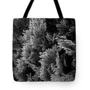 Cypress Branches No.1 Tote Bag