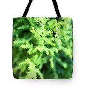 Cypress Leaves Close Up Tote Bag