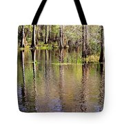 Cypress Trees Along The Hillsborough River Tote Bag by Carol Groenen