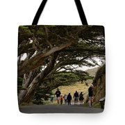 Cypress Tunnel Tote Bag
