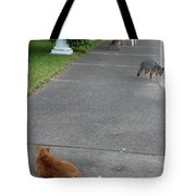D-a0050-dc Gray Fox And Our Cat On Our Pool Deck Tote Bag