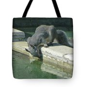 D2b6341-dc Gray Squirrel Drinking From The Pool Tote Bag