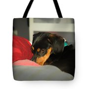 Dachshund Dog, Pug Dog, Good, Time, Bed, Sleeping, Relaxing Time Tote Bag