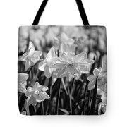 Daffodil Glow Monochrome By Kaye Menner Tote Bag
