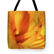 Daffodil - Peeping Tom 05 Tote Bag
