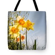 Daffodils Backlit Tote Bag