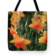 Daffodils Tote Bag by Tracy Hall