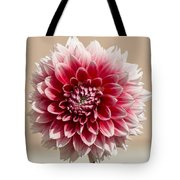 Dahlia- Pink And White Tote Bag