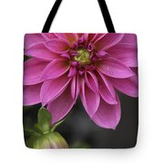 Dahlia With Dew In Pink Tote Bag