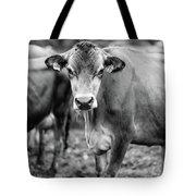 Dairy Cow On A Farm Stowe Vermont Black And White Tote Bag