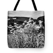 Daisies By The Roadside At Loch Linnhe B W Tote Bag