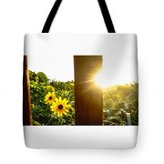 Daisies Dune Fence Sunrise Delray Beach Florida Tote Bag