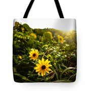 Daisies Tangled Sunrise Delray Beach Florida Tote Bag