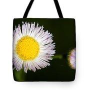 Daisy Fleabane 2 Tote Bag