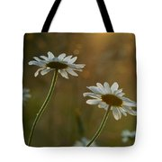 Daisy Sunset Tote Bag