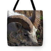 Dall Sheep Ram  Tote Bag