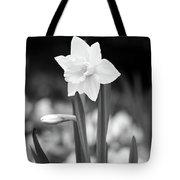 Dallas Daffodils 53 Tote Bag