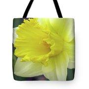 Dallas Daffodils 80 Tote Bag