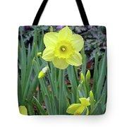 Dallas Daffodils 83 Tote Bag