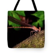 Damselfly 006 Tote Bag