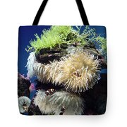 Dance Of The Anemones Tote Bag