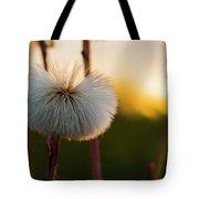 Dandelion At Sunset Tote Bag