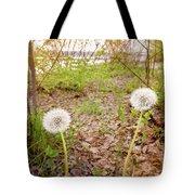 Dandelion Close To The River Tote Bag