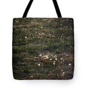 Dandelions From Foot To Far Tote Bag