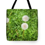 Dandelions In Connecticut Tote Bag