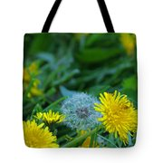Dandelions, Young And Old Tote Bag