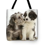 Dandy Dinmont Terrier And Border Collie Tote Bag