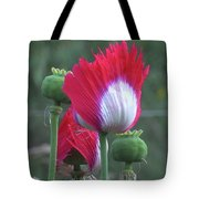 Danish Flag Papaver Somniferum Opium Poppies - Flowers And Pods Tote Bag