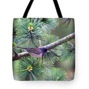 Dark-eyed Junco On A Pine Tree Tote Bag