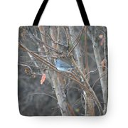 Dark Eyed Junco Perched On Tree Limb Tote Bag