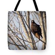 Dark-morph Western Red-tailed Hawks Tote Bag