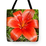 Dark Orange Red Lily II Tote Bag