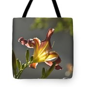 Dark Red Day Lily With Sun Shining Through I Tote Bag