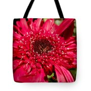 Dark Red Gerbera Daisy Tote Bag