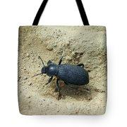 Darkling Beetle In Sand Tote Bag