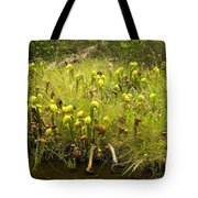 Darlingtonia Plants Grow Beside Tote Bag