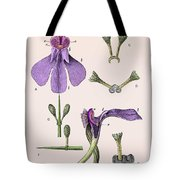 Darwins Orchis Pyramidalis, Illustration Tote Bag