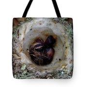 161549 Day Old Hummingbird Babies Tote Bag