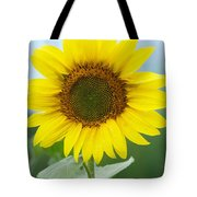 Dazzling Sunflower Tote Bag