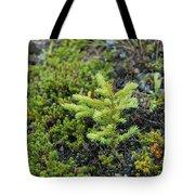 Ddp Djd Spruce Seedling 16 Tote Bag