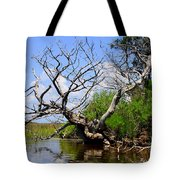 Dead Cedar Tree In Waccasassa Preserve Tote Bag